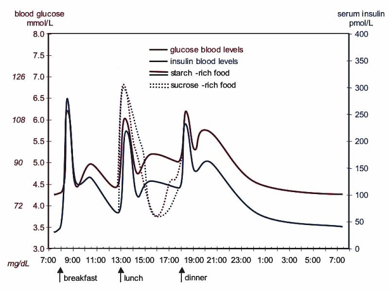 The extra high peak in blood sugar after eating sucrose in clearly shown, as is the drop below normal levels