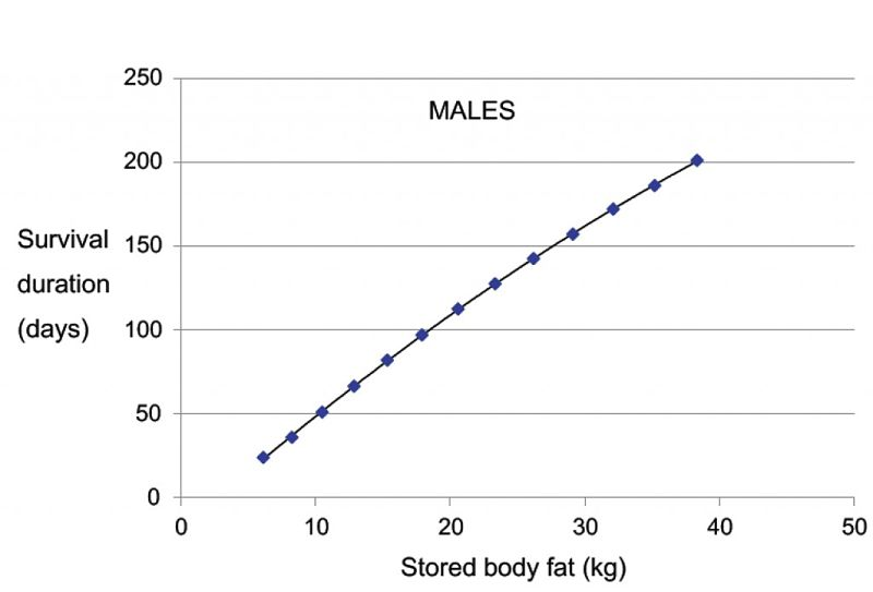 Starvation Survival Rates for Males of various Weights