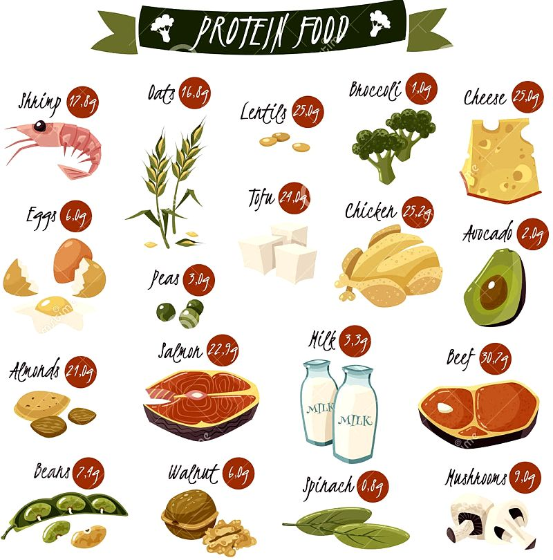 High protein foods, animal and vegetable.