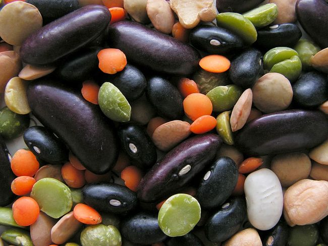 Most beans are high calorie but are good sources of fiber and Vitamins