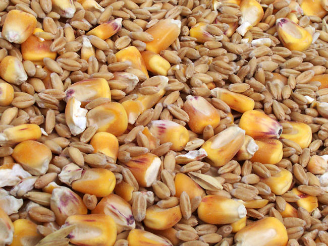 Grains are a great source of fiber - learn which grains are best