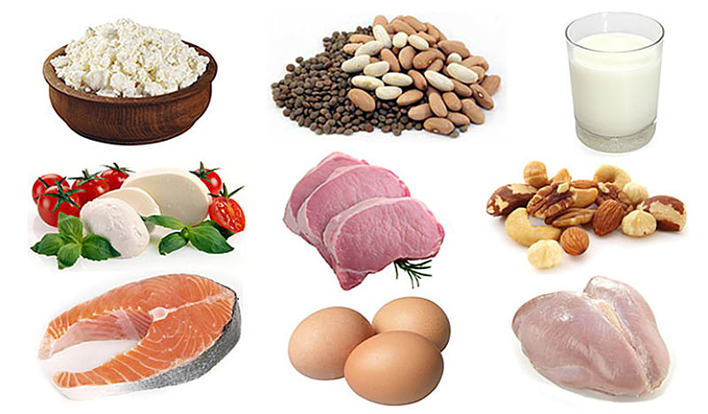 Protein can be sourced from a wide range of foods with choices about calories and fat