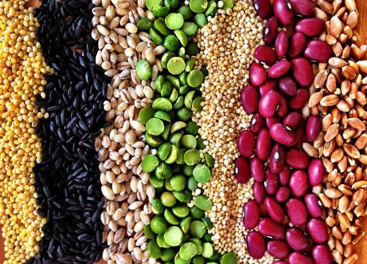 Some grains and pulses have relatively high protein levels