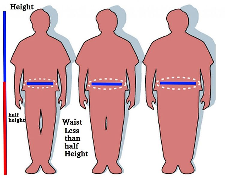 The ratio of waist circumference to half height is an excellent way of monitoring weight status. It is more accurate and reliable than BMI and much easier to undertake