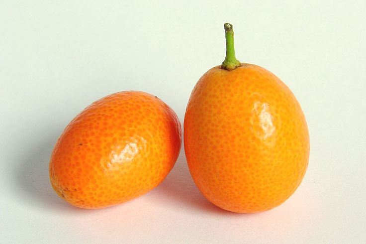 Kumquats are a great food for weight loss with only 71 Calories, 2g of protein and 6g of fiber per 100 g.