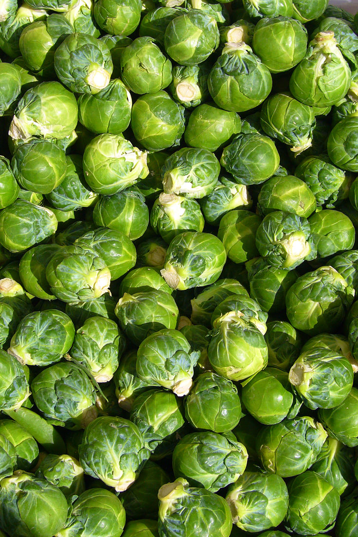 Brussel Sprouts are an excellent food for weight loss. They only have 43 Calories, 3g of protein and 4g of fiber per 100 g.